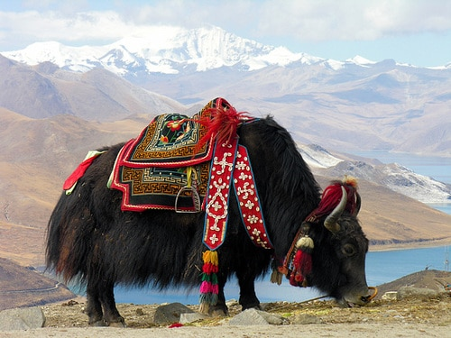 tradition mariage Tibet
